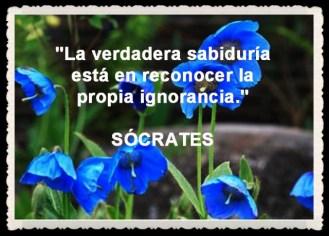 AMAPOLAS AZULES-blue-poppy (8)